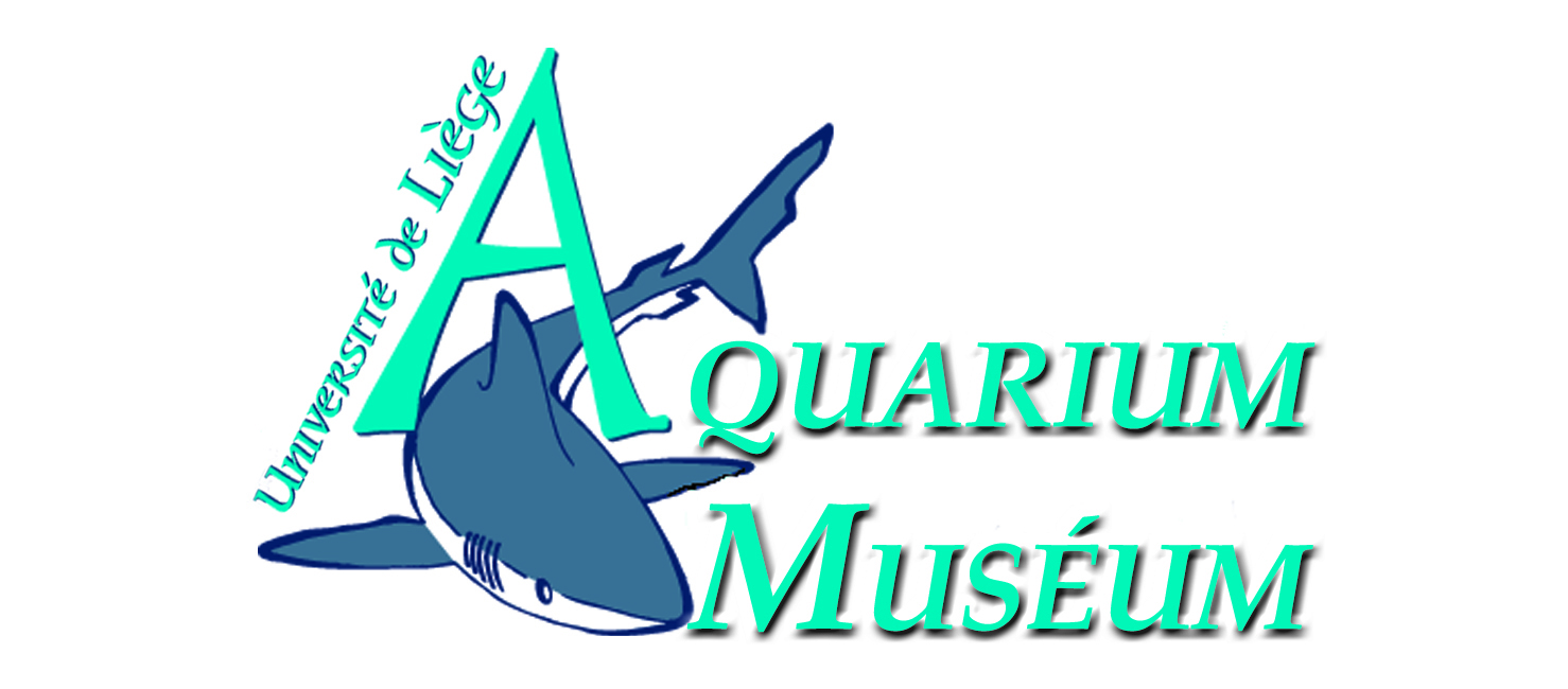 Aquarium-Muséum de Liège
